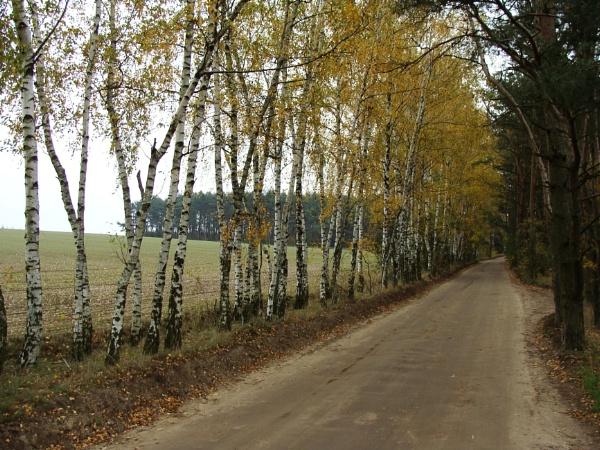 Yellow Birch Road by PentaxBro