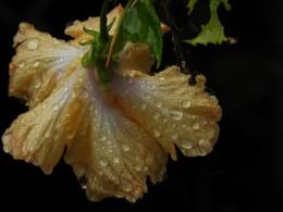 Drops on Flower