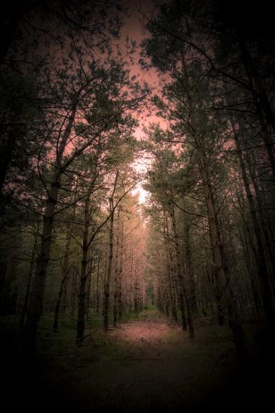 Dark Woods by jpappleton