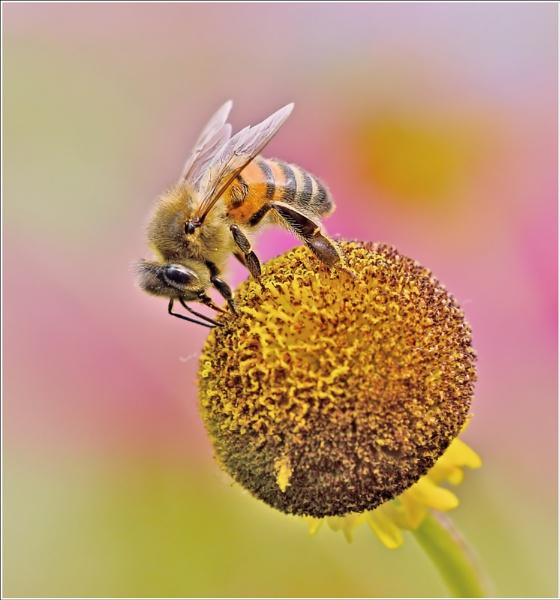 Pollen picking. by bricurtis
