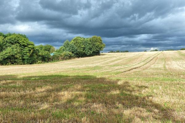 Lower field by brusque