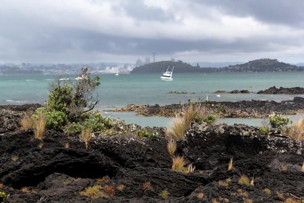 On Motutapu Island, Auckland by sandwedge