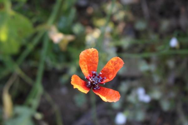 Little Orange Floater by onetreehill
