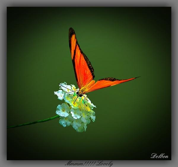 mmmm........... lovely by Delbon
