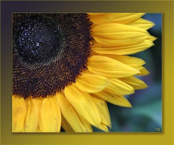 Josie\'s Flowers by LynneJoyce