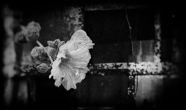 Flower by NotLostinFrance