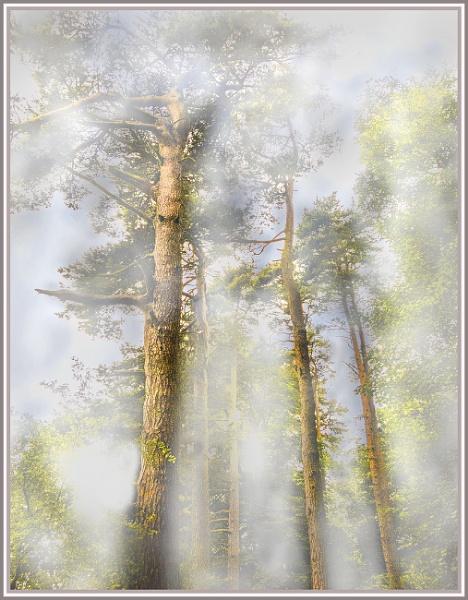 mist among trees by derekp