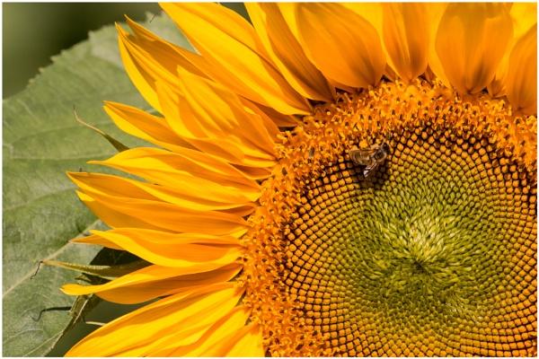 Sunny Day by capto
