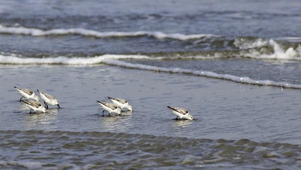 Beach birds 1 by banehawi