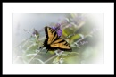 Tiger Swallowtail by taggart