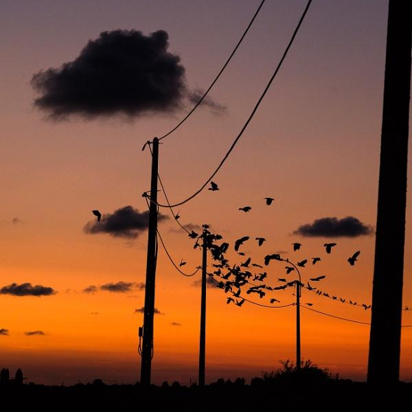 Birds on poles by Drummerdelight