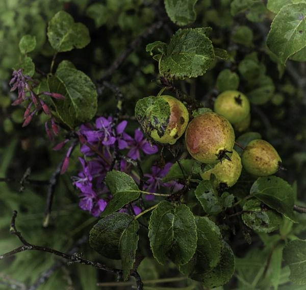 Hedgerow by BillRookery
