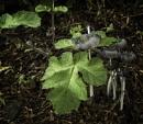Green leaf by BillRookery