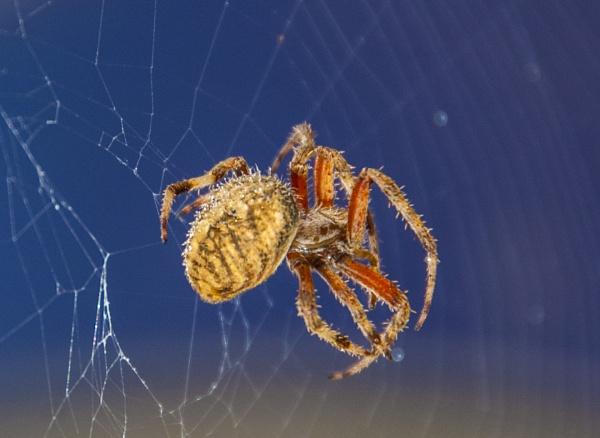 Web Repair by brieng
