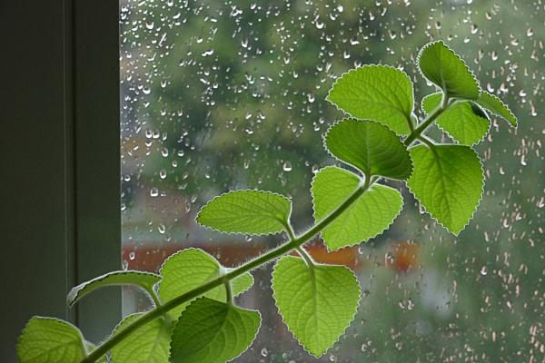 Again it rains by Zenonas
