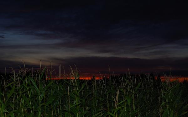 Cornfields Sunset by PentaxBro