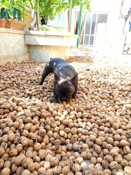 In the walnuts sea is the  fun by viktorinax