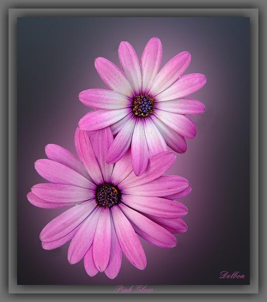 Pink Glow by Delbon