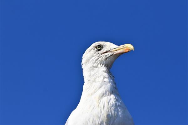 birds eye view by HoneyT