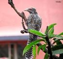 My favourite bird... by debu