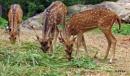 Deer Family by debu