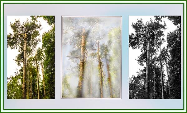 triptych by derekp