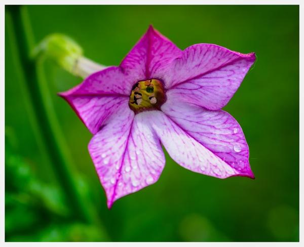 Looking in to the flower by Nikonuser1