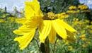 Van Gogh Sunflowers by pentaxpatty