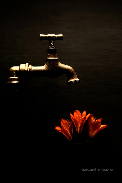 TAP AND FLOWER by espresso