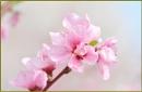 Pinkly pink by fotobee