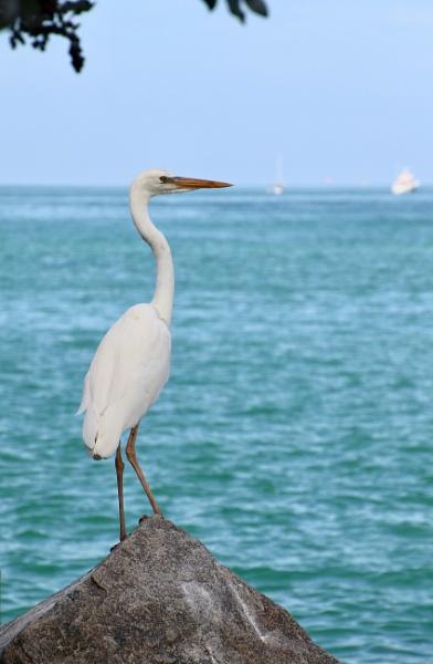Florida birds2 by jocas