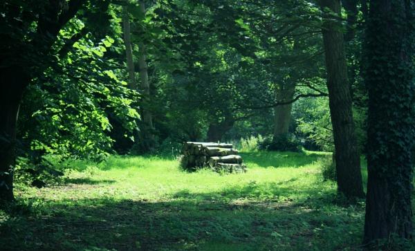 Under the trees by IreneClarke