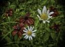 Roadside flowers by BillRookery