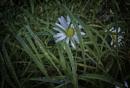 Wet grass by BillRookery