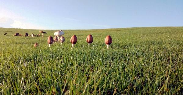 mushrooms on a field 1 by Nesto