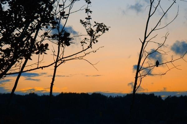 sunset crow by leo_nid