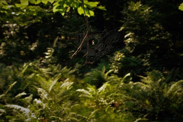 Little Spider-like Alien by PentaxBro