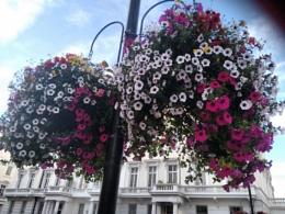 Beautiful  on the street