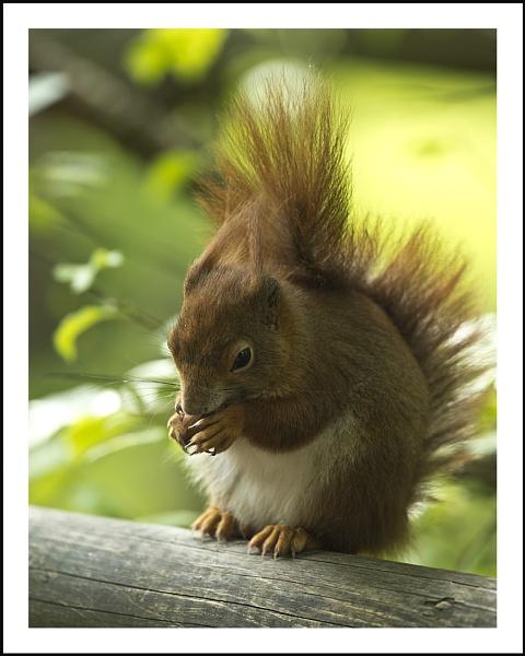 Nutty by Maiwand