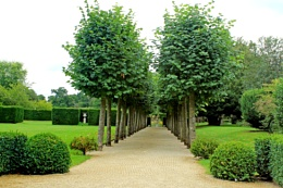The Avenue of trees and the Urn