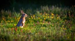 Rabbit & the Bee