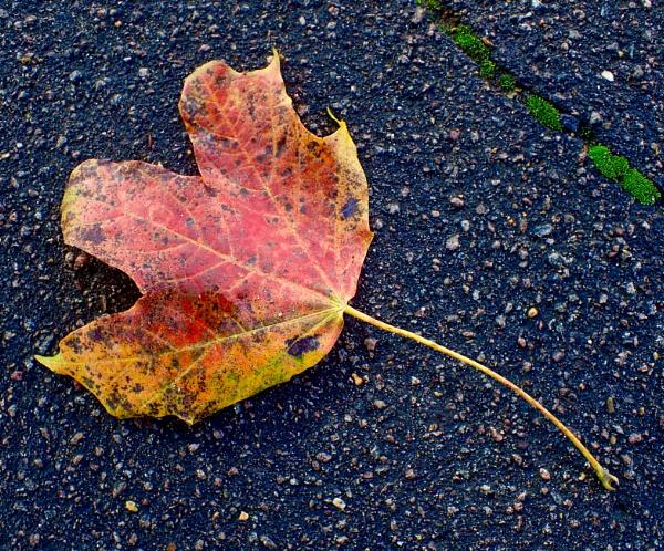 Autumn starts by nclark