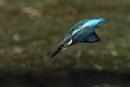 Flying Tom by AlanWillis