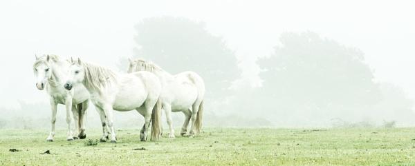 White Horses by true