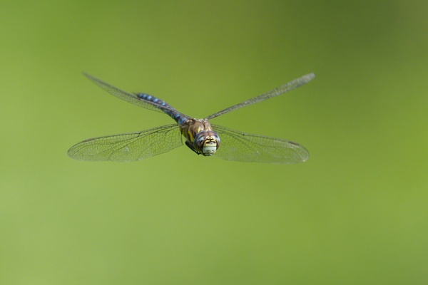 Migrant Hawker by Giz