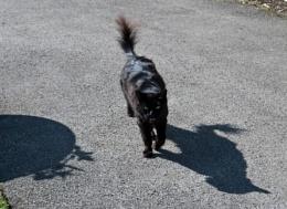 Black Cats?