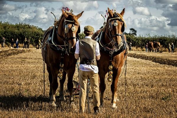 Heavy Horses by vivdy