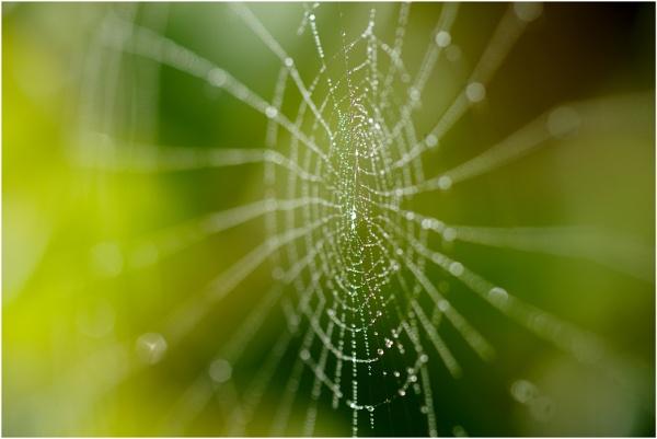 Cobweb by dark_lord