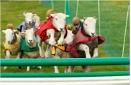 Sheep Racing by dark_lord
