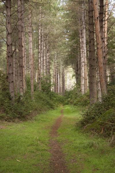 Woodland Walk by Tony0062